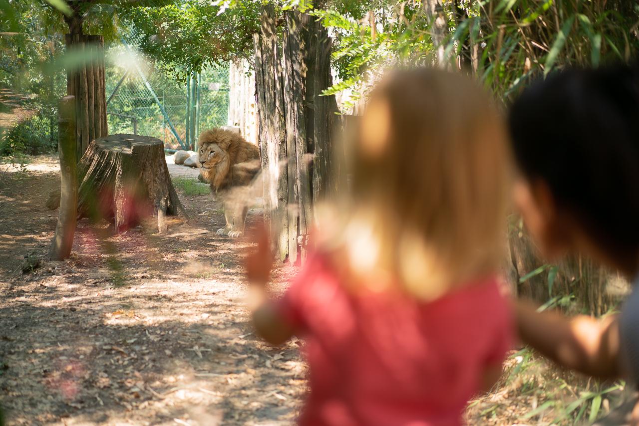 Protetto: Zoo di Pistoia